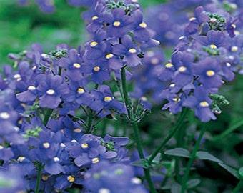 Nemesia- Blue Gem- 100 Seeds
