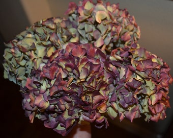 Dried hydrangeas,  Burgundy hydrangeas, Hydrangeas - for dried floral arrangements, Wedding arrangements, Large bunch!!