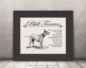 Bull Terrier - A Retro - Vintage Style Dog Breed Wall Art Print for Dog Lovers With Dictionary Definition & Antique Illustration