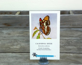 Vintage California Butterfly Flashcard, Insect Ephemera, Garden   Butterfly Card, California Sister Butterfly
