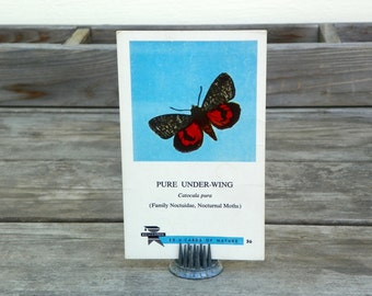 Vintage Flashcard, Red Black Moth, Pure Under Wing Butterfly, 60s School Ephemera, Teaching Flashcard