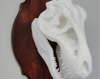 HUGE T-Rex Hunting Trophy!