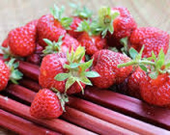 Organic Strawberry Rhubarb Jam 8 oz