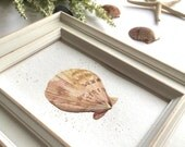 Seashell Watercolor Beach Shell Painting with Gold Shimmer Accent Beach Theme Decor Hand-Painted