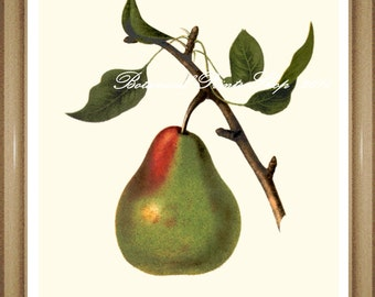 Pear Print. Botanical Print. Pear. Fruit Print. Pears Print. Fruit Wall Art. 8x10""