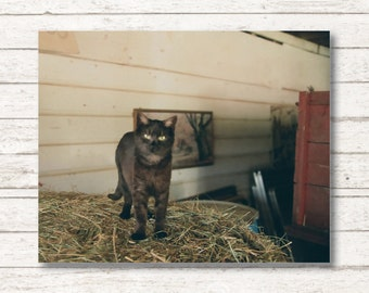 Barn Cat - Canvas Wall Art , Farm Wall Art, Cat Photography, Cat Photography Wall Art, Farm Photography, Canvas