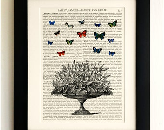 ART PRINT on old antique book page - Butterflies with Plant, Vintage Upcycled Wall Art Print, Encyclopaedia Dictionary Page, Fab Gift!