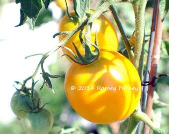 20 Lemon Boy Tomato Seeds