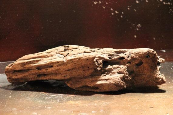 Driftwood Lake Erie Trunk Root Natural Wood Wood Art Nautical
