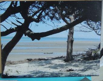 Shackleford Banks  - beach canvas photo - photo canvas - island photo - coastal photography - beach house decor - Crystal Coast -beach lover