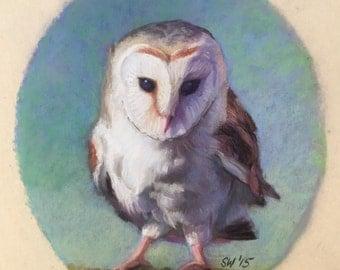 Painting-Barn Owl-Original-Pastel