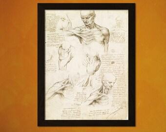 Da Vinci Anatomical Drawing Print - Medical Decor Human Anatomy Wall Decor Anatomy Poster Human Body Art Da Vinci Poster 1 GREE