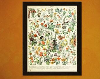 Vintage Flower Print 1909 - Vintage Wall Decor Botanical Prints Flower Print Garden Home Decor Romantic Wall Art Floral Illustration