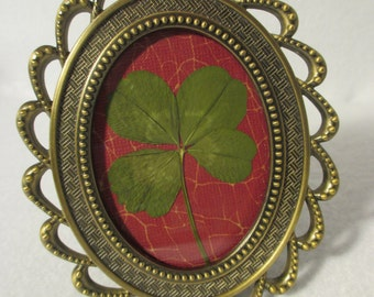 Framed Four Leaf Clover