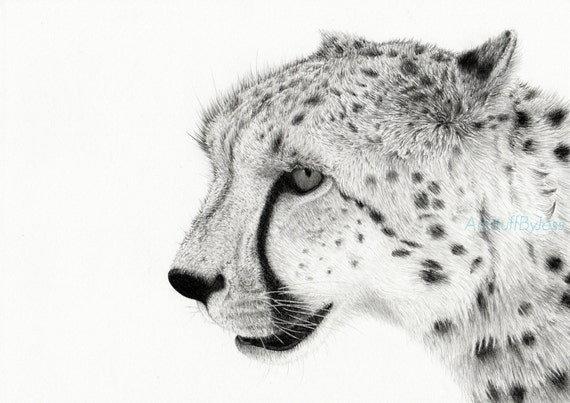 Dessin de gu pard fine art graphite crayon dessin dessin - Guepard dessin ...