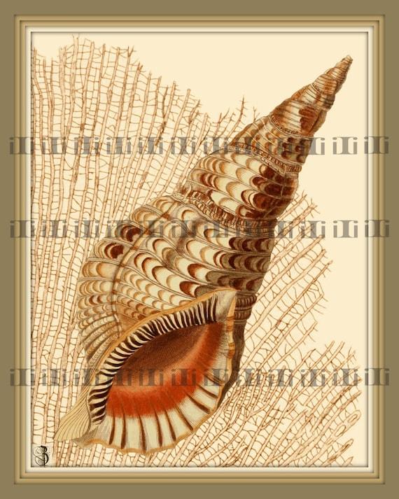 SHELL Art Print SEA SHELL Shell Wall Art Shell Natural
