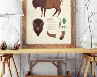 American Bison Poster, National Park Art, Yellowstone Bison, American buffalo, parks wildlife, scientific illustration
