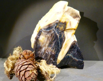 Petrified Wood, Fossil, Tree - Branch, Specimen, Australia, Supplies, 2.8lb, fossil, paper weight, rough, raw, black, cream