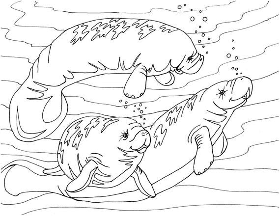 jeanoroberts manatee coloring page sea cow art digital download adult coloring page coloring page manatees sea cow