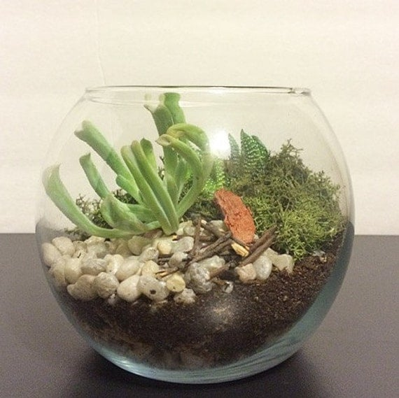 diy terrarium kit succulent kit miniature garden by shopverdure. Black Bedroom Furniture Sets. Home Design Ideas