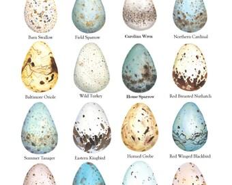 Eggs of Vermont