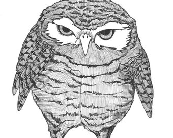 burrowing owl glares at you ORIGINAL artwork ink drawing on paper 6 x 6
