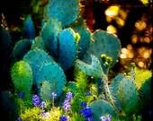 Bluebonnets, Texas Photography, Cactus Art, Texas Bluebonnets, Morning Photography, Nature Photo, Blue and Green, Art for Texans, Gift Idea