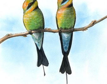 Rainbow Bee-eaters - Bird Fine Art Print 8x10 inches (20x25cm) - Giclee Reproduction of Watercolour and Ink, bird art, woodland nature decor