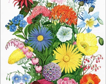Vintage 1970 Flowering Perennial Plants Big Bouquet Floral Print for Framing, Loads of Color and Blooming Perennial Garden Flowers