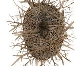 LARGE Domed Nest Print, birds nest art, nature illustration, giclee art print, bird art, natural history, watercolor print