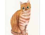 """watercolor pencil drawing cat art print  """"A Sweet Ginger """"  orange yellow tabby cat lover's gift nursery room home wall decor"""