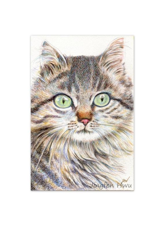Cat Drawing Art Print A Handsome Cat Long