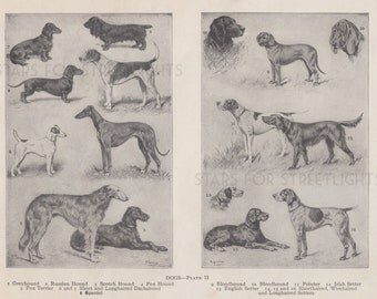 Vintage Dog Print Digital File, Antique Encyclopedia Page 11x8