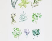 Herbs - Kitchen Art - Watercolor Illustration Print  - 8 x 10