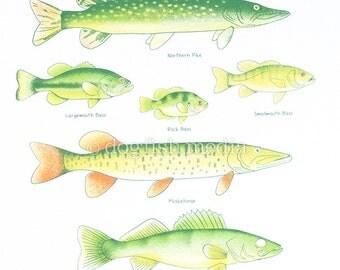 """11 x 14"""" Fish Guide Screen Print Poster"""