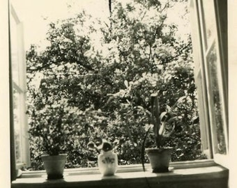 "Vintage Photo ""Happy Window"" Decor House Plant Snapshot Photo Old Photo Black & White Photograph Found Photo Paper Ephemera Vernacular - 24"