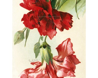Red Carnations Card | Flowers Greeting Card | Option Matching Sticker