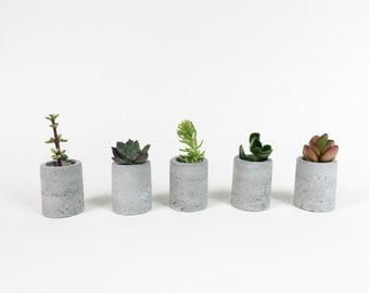 Gift set of 5 - Cylindrical Concrete Planter - Concrete Vase - Cylinder -