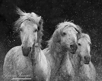 Three White Horses Splash - Fine Art Horse Photograph - Horse - Camargue -  Black and White