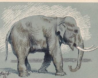 """A. Laptev """"Elephant"""" Postcard -- 1956"""