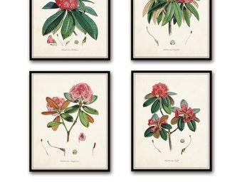 Rhododendron Print Set No. 2, Botanical Prints, Giclee, Art Print, Antique Botanical Prints, Flower Prints, Illustration, Collage