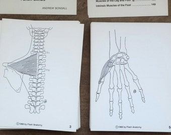 SALE///Vintage 1970's Flash Anatomy Medical Flash Cards:The Muscles, by Andrew Bonsall, Paper Ephemera