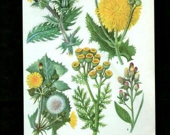 WILD FLOWERS Vintage Botanical Print Antique, yellow plant print 35  botanical print, bookplate art print, herb plants plant wall print