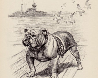 Beautiful Vintage BULLDOG Print Vintage Bulldog Art Black and White Gallery Wall Art Gift for Dog Lover Home Library Decor 2663
