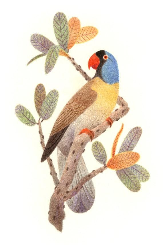 Extinct Parrot Colorful Art Print Mascarene Parrot