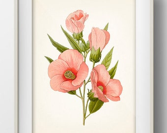Hibiscus Roseus Botanical Illustration - FL-08 - Fine art print of a vintage natural history antique botanical illustration