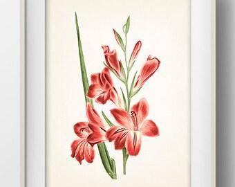 Fuschia Flowers #1 - FL-07 -  Fine art print of a vintage natural history antique botanical illustration