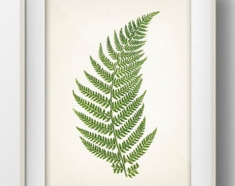 Green Fern 2- PL-02 - Fine art print of a vintage natural history antique illustration - PL-02
