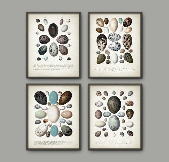 Bird eggs antique illustration wall art poster by for Egg tray wall hanging