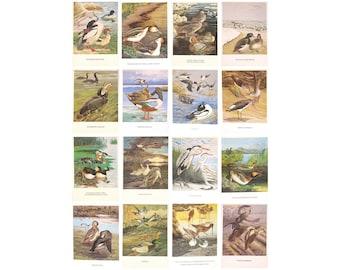 Birds of Russia, Set of 16 Soviet Unused Postcards, Baikal, Illustration, Yegorov, USSR, Soviet Union, 1984, 1980s, 80s